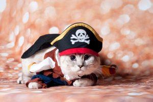 Cat Costumes   Cat Costume Ideas   Halloween Costumes for Cats   Halloween Cat Costume Ideas   Halloween   Costume Ideas for Cats