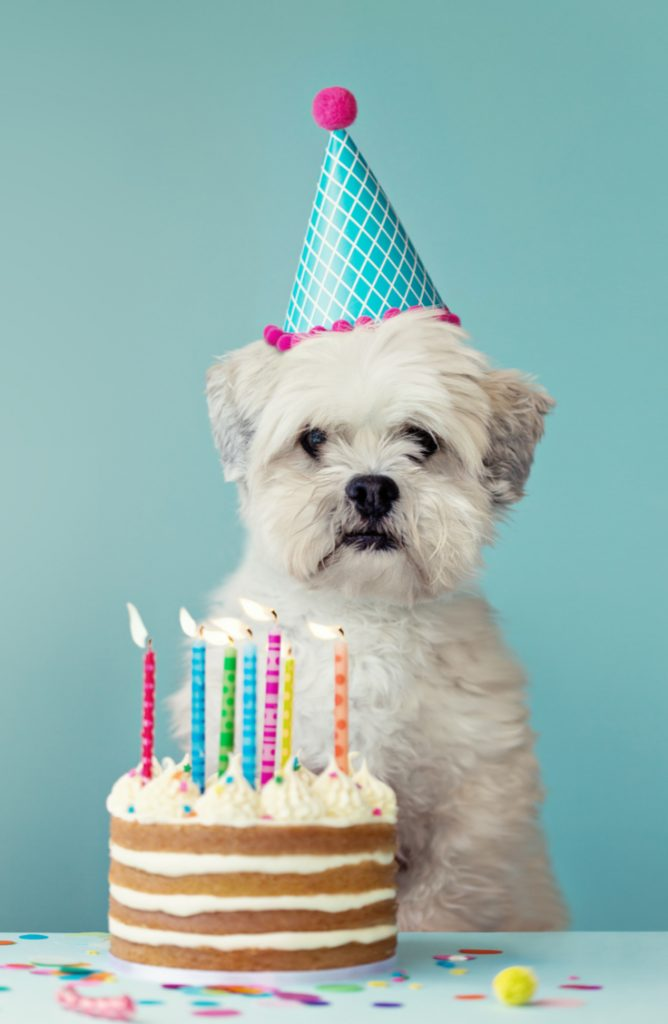 If you're a dog owner, then you need to check out these birthday cake recipes for dogs. They will make your fur-baby's birthday the best ever.