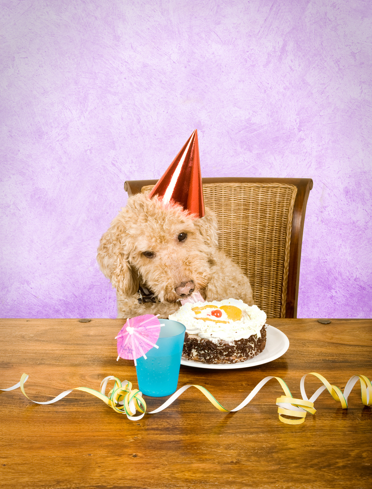 If you're a dog owner, then you need to check out these birthday cake recipes for dogs. Your fur-baby will be in heaven with it!